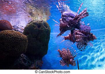 marine creature in Aquarium
