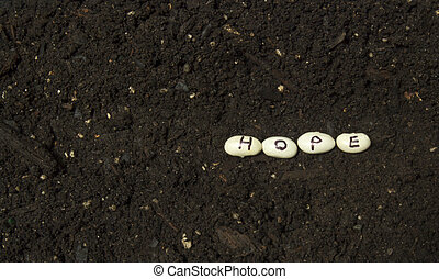 Sowing The Seeds Of Hope - Sowing the seeds of hope in a...