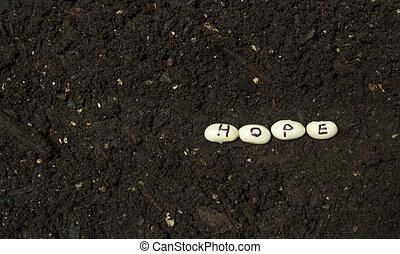 siembra, el, semillas, de, esperanza,