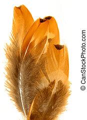 pluma, en, blanco