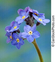 azul, flor, com, amarela, centro, (star, flower)