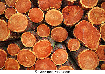 cut tree trunks  - A pile of cut tree trunks