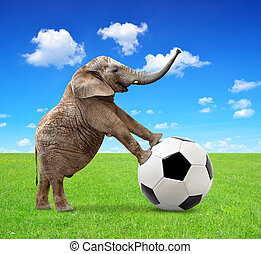 elephant with soccer ball - African elephant with soccer...