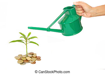 Business growth - Money cash plant being watered