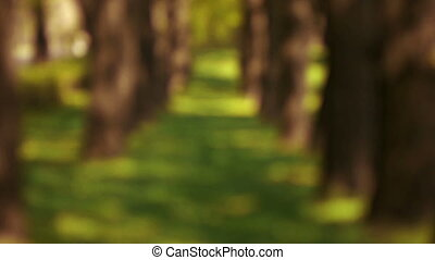 Alley trees - Avenue of trees, moving the focus lens from...
