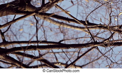 on a tree branch - Scrolling over his head bare branches of...