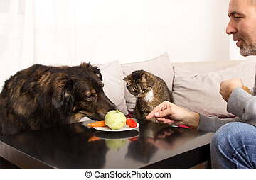 Vegetarian pets - A dog and a cat are curious about a plate...