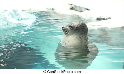 seal floating in water and ice