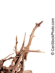Snag - Dry dead snag isolated on white background