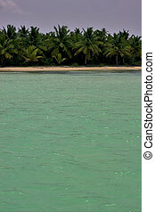 coastline and tree in dominicana - coastline and tree in...