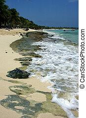 ocean in republica dominicana - ocean coastline palm and...