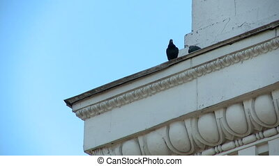 Pigeons on building's ledge with ornament - View of pigeons...