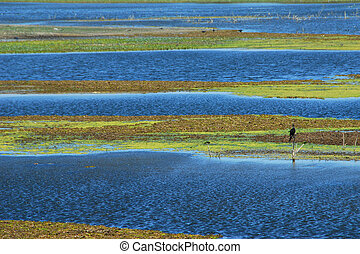 Tropical Marsh - View of beautiful tropical marsh with water...