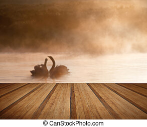 Mated pair of swans on misy foggy ASutumn Fall lake touching scene with wooden planks floor