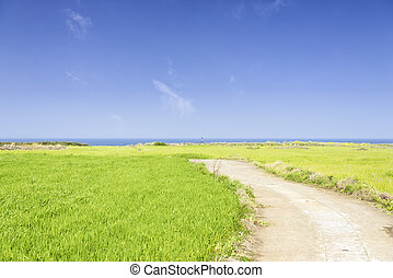 Landscape of green barley field and horizon - Landscape of...