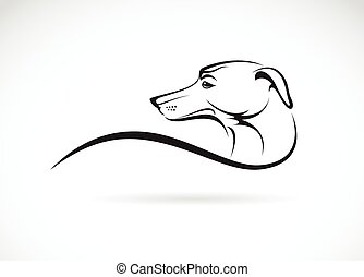 Vector image of an dog azawakh on white background