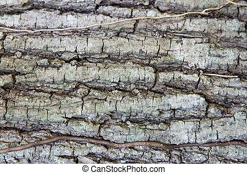 ladrar, árvore, textura, tronco