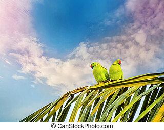 Emoção, Amor, disposição, papagaios, não, ou