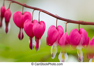 Macro photo of hearted-shaped flower blossoms - Macro photo...