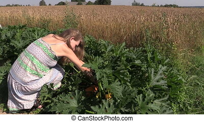 woman harvest zucchini - Pregnant farmer woman in dress...