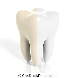 Molar tooth white and yellow isolated on white background