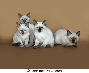 Four Thai white kitten going on yellow