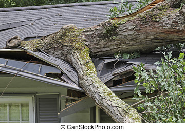Large Oak Tree Crushes the Roof of a Small House - A storm...