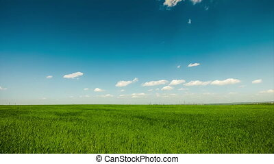 Blue clouds on a background of green field Ukraine timelapse