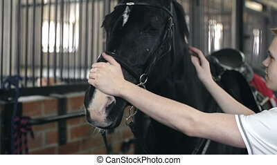 Hippotherapy - Front view of horse standing in the stalls...