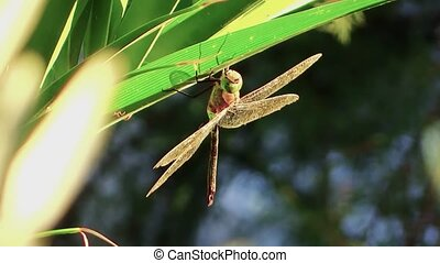 big dragonfly and little spider - Insects world. Beautiful...