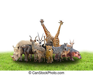 group of africa animals with green grass on white background...