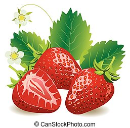 strawberries  - vector juicy strawberries