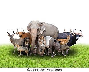csoport, állatok, ázsia