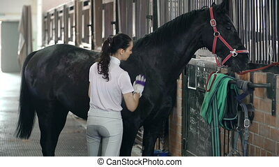 Curry Comb Procedure - Rear view of horse handler grooming...