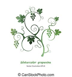 Watercolor style green grape vine. Vector illustration.