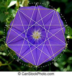 Patrones, en, naturaleza, flor, geometría,