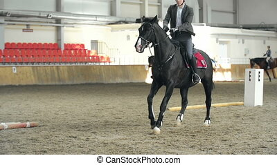 Show Ring Activities - Tracking shot of horse running in the...