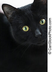 Black cat in dark close-up