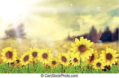 In the morning with sunflowers