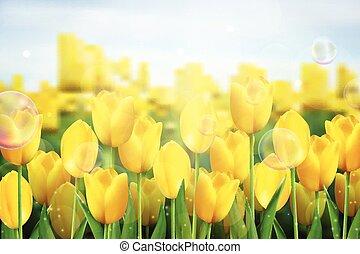Yellow tulips flowers in the garden