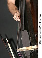 Double Bass - Bass Player