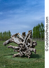 Gnarled tree trunk used as a modern sculpture.