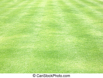 Golf Courses green lawn grass nature background.