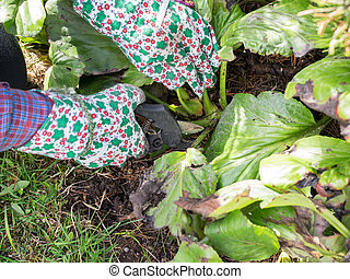 Weeding - Woman weeding in the garden and she use the garden...
