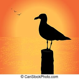 seagull silhouette at sunset