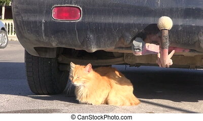 cat rest lying near car - old cat rest lying in sunlight...