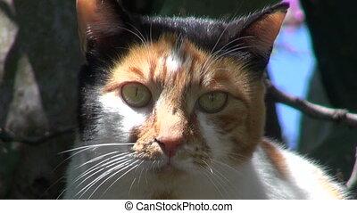 cat in Rhodes derelict garden - cat in Rhodes island...
