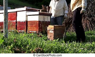 Work in apiary - Two beekeepers are on spring checking of...