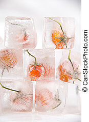 Tomato frozen - Presentation of ice cubes inside with grains...