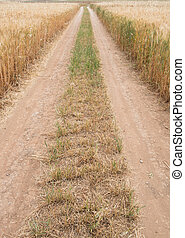 Straight directive country road through a wheat field -...